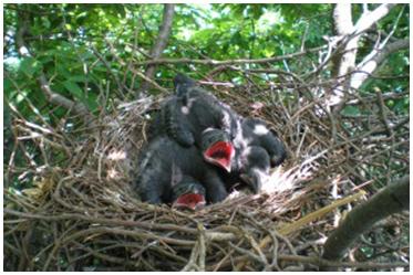 巣の撤去作業